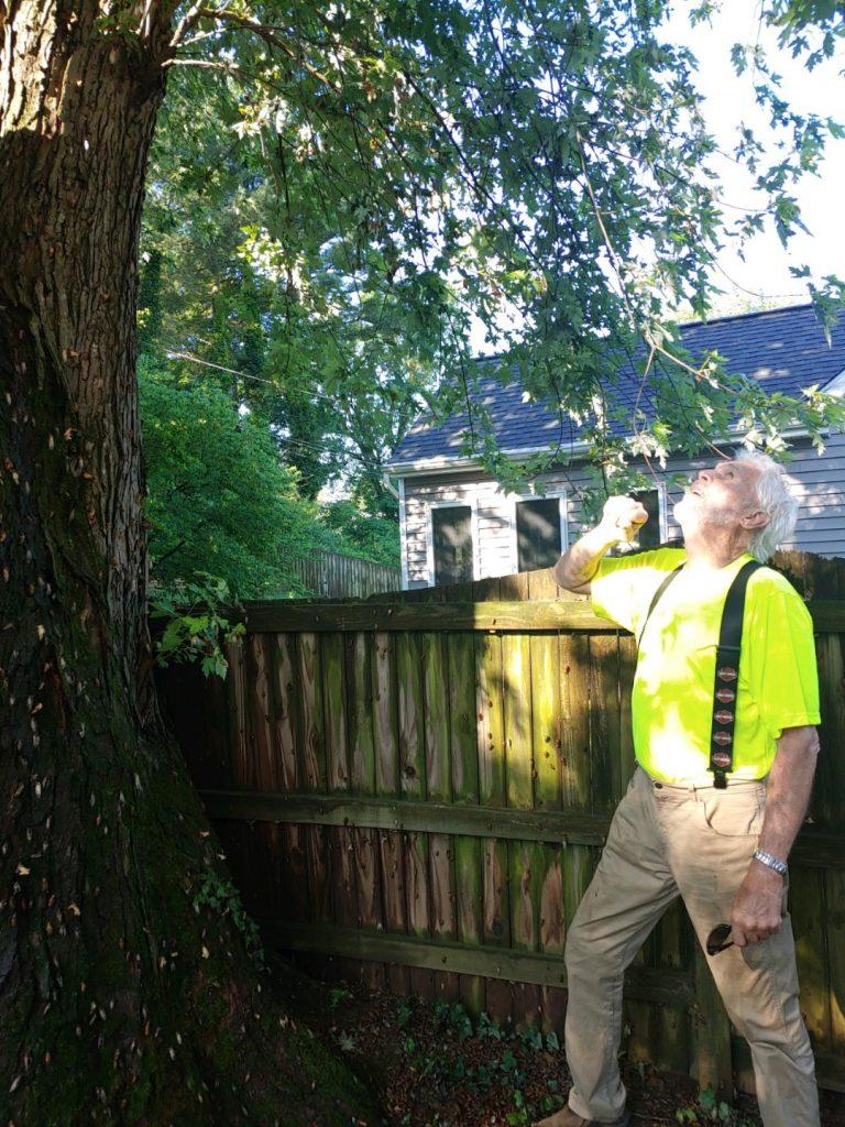 John inspecting damaged tree