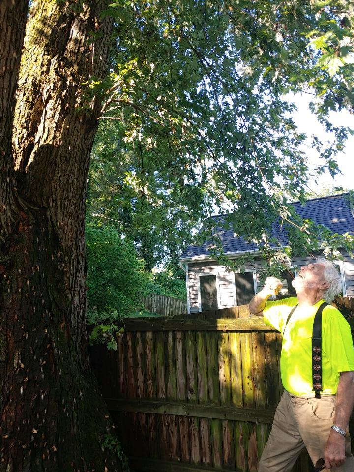 John Miley Inspecting diseased tree