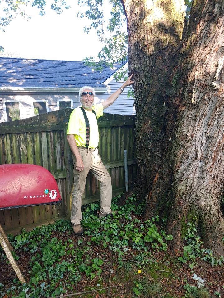 john miley assessing damaged tree - Glen Arm, MD