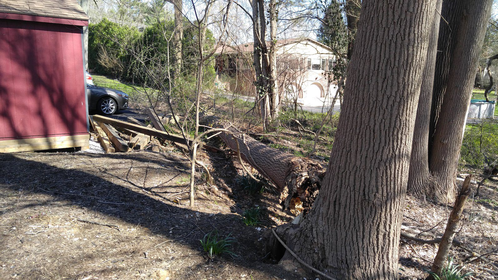 rotted tree that split and fell