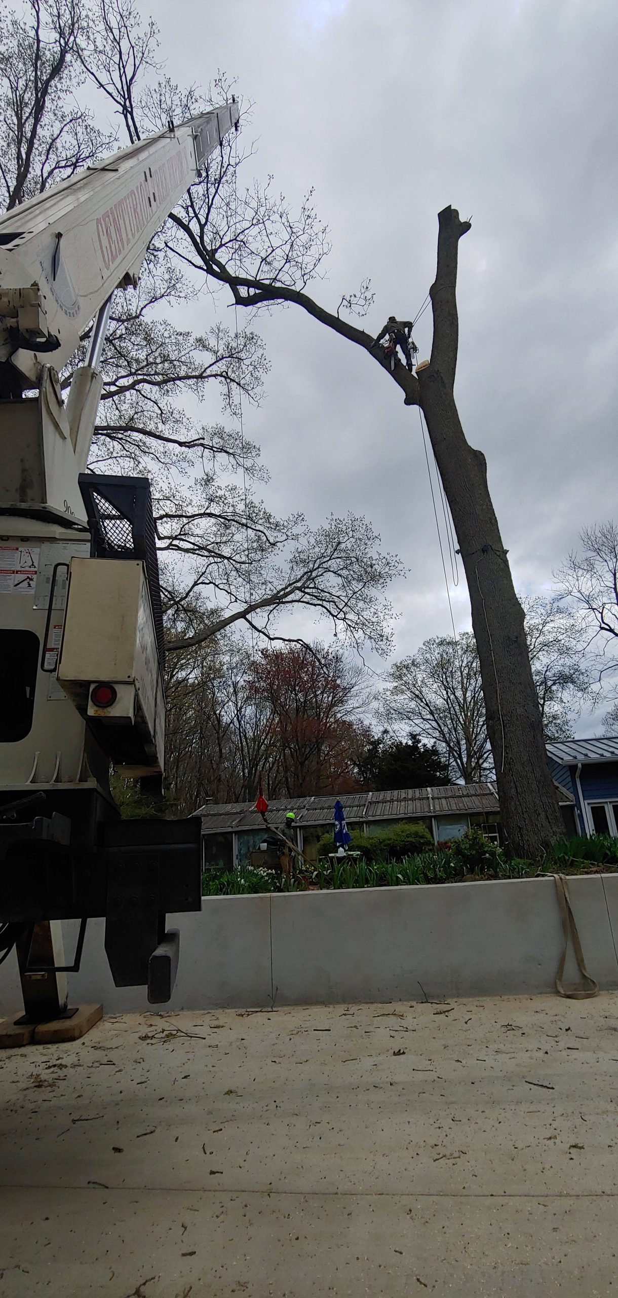 removing tree adjacent to rancher home