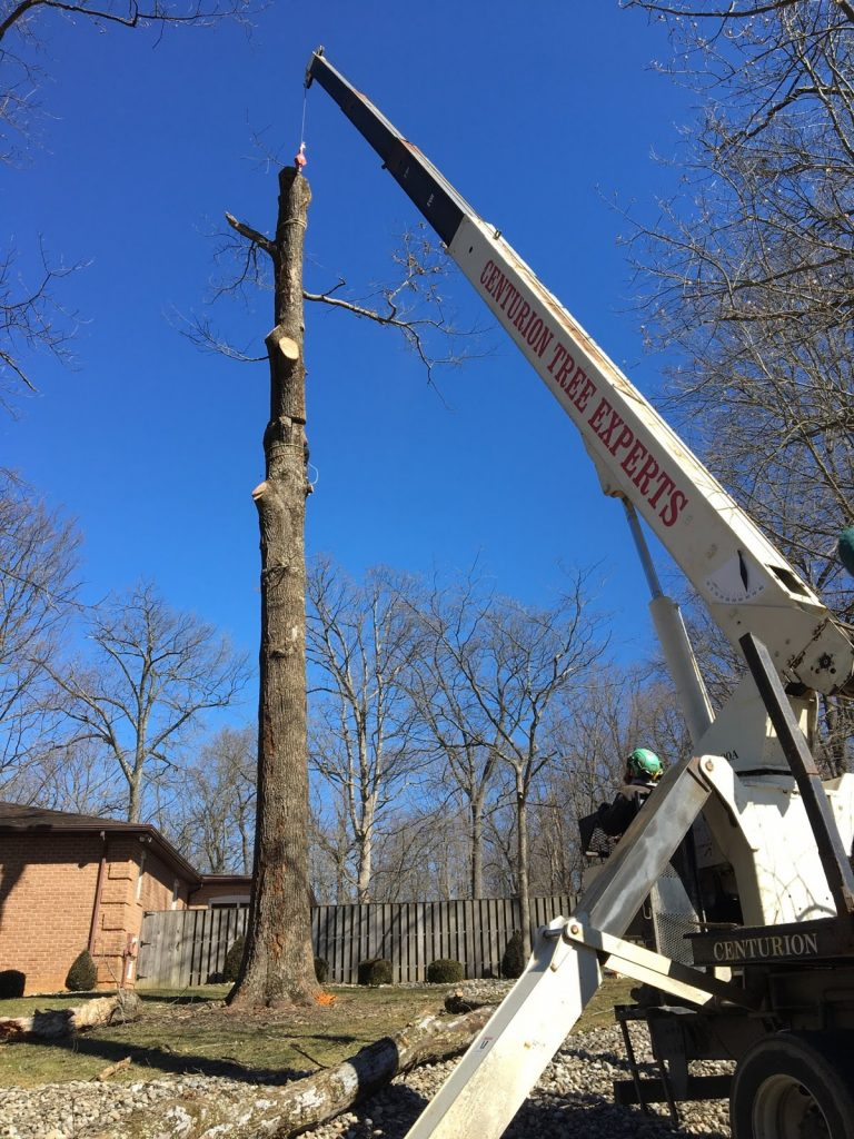 Removing tree from home in Phoenix, MD