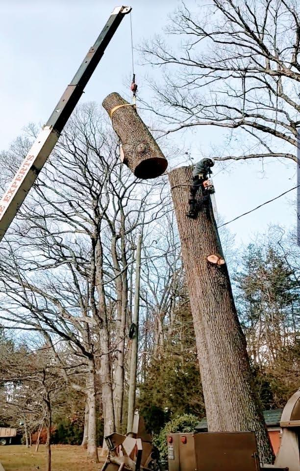 removing top section of tree with tree crane