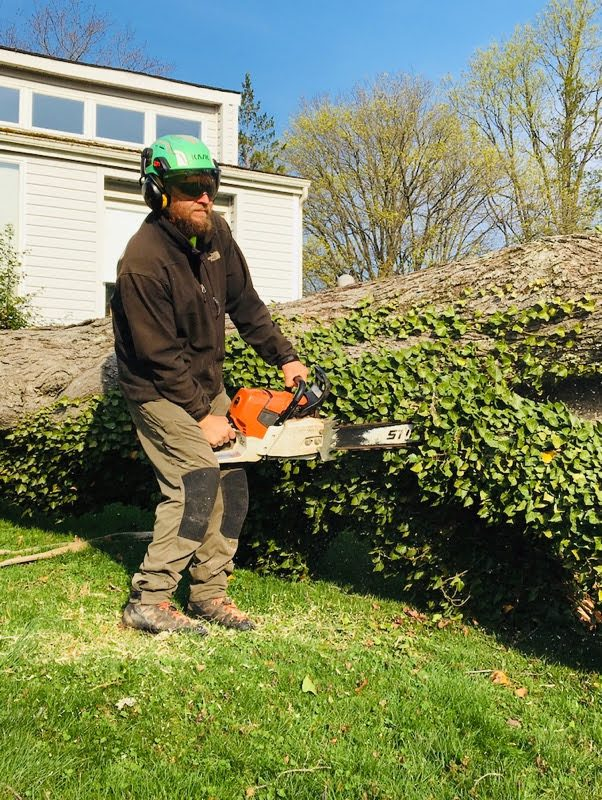 cutting up felled tree overtaken by ivy