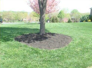 good healthy mulching of base of tree