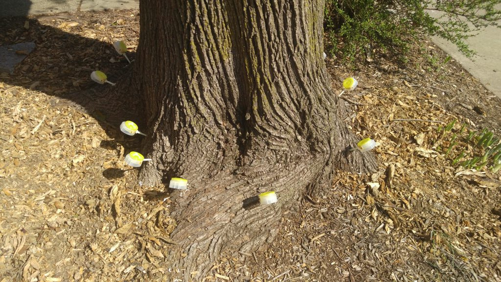 chemical application of tree in Cockeysville, MD