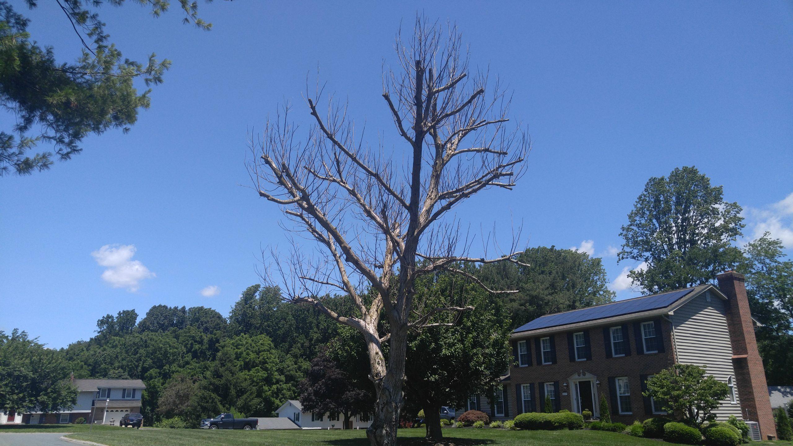 Tree Topped in Glen Arm, MD