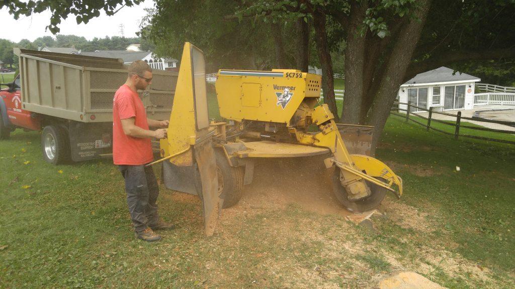 stump grinding service in Jacksonville, MD