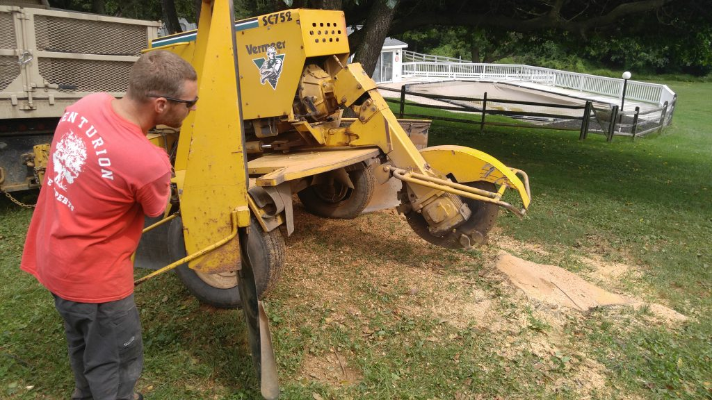 Stump grinding service in Fallston, MD