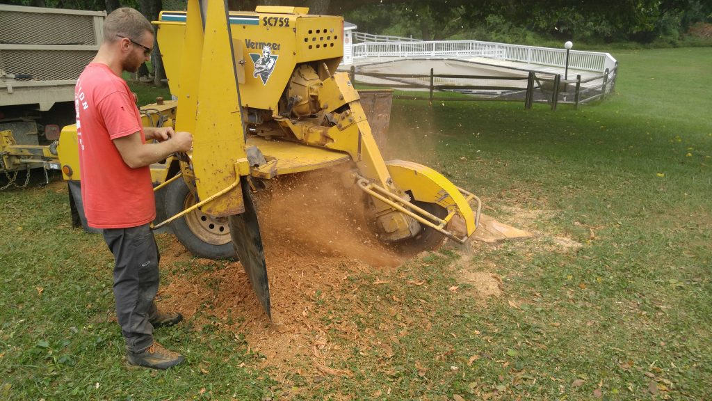 stump grinding service in Bel Air, MD