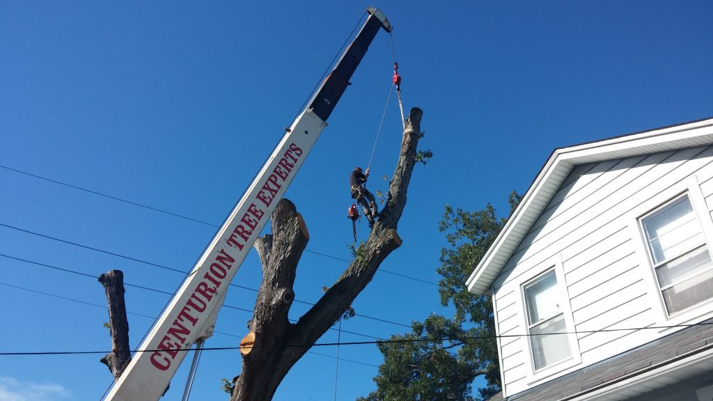 Cutting and removing tree in Fallston, MD