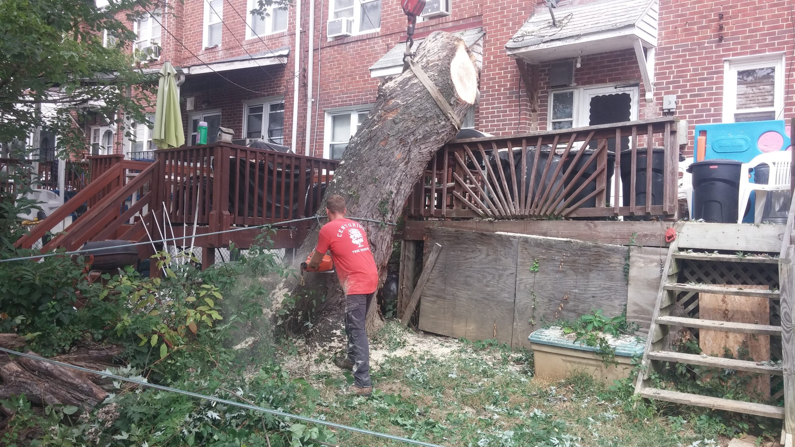 Tree removal from back yard in Baltimore, MD