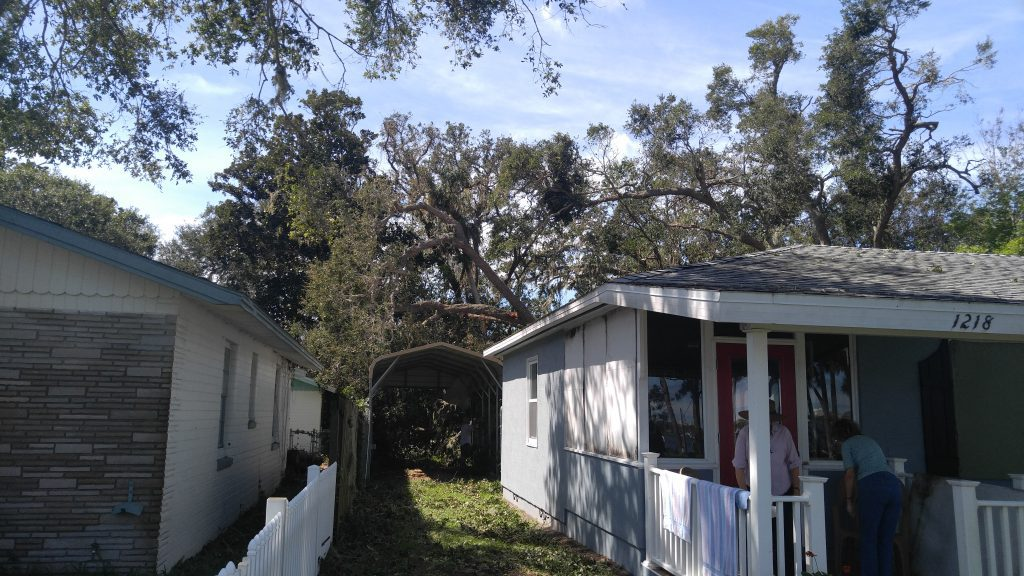 Emergency tree service for tree fall on shed