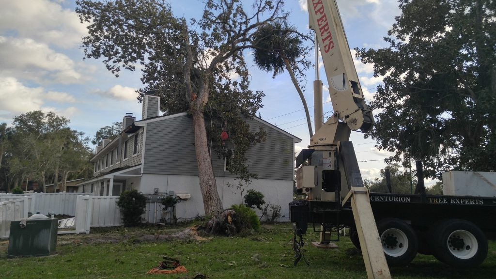 Emergency tree service for tree fall on house