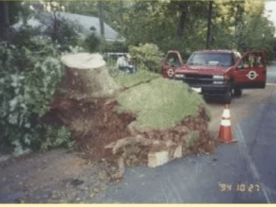 tree uprooted in road - jarrettsville, md