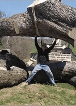 standing under tree trunk