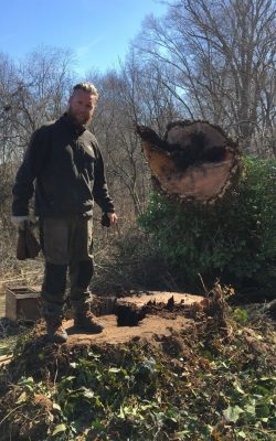 Tim MIley on stump following treee removal - Glen Arm, MD