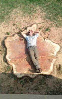 Stump following tree fell in Glen Arm, MD